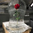 red rose in case _ beauty and beast